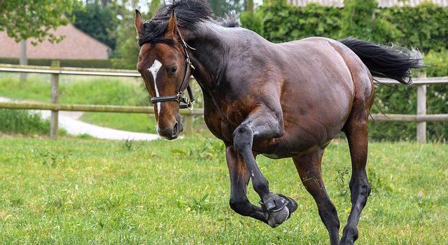 Alternatívna liečba koní