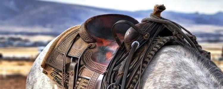 Alternatívna pomoc koňom